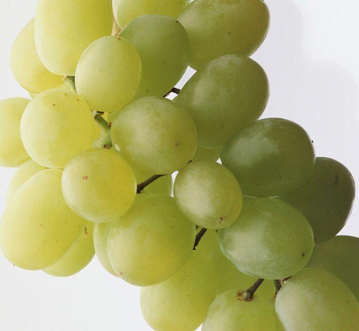 Las semillas de uva, buenas para la diabetes